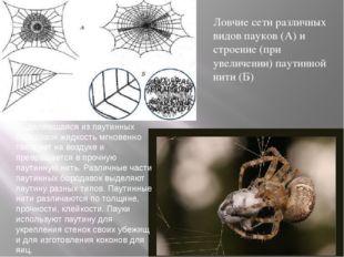 Ловчие сети различных видов пауков (А) и строение (при увеличении) паутинной