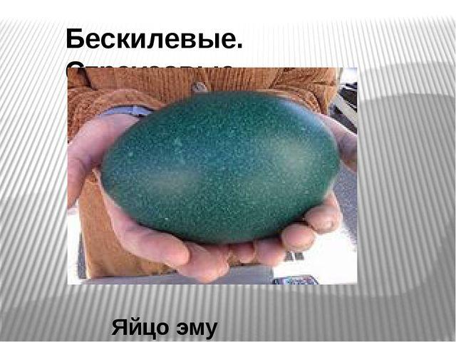 Бескилевые. Страусовые Яйцо эму