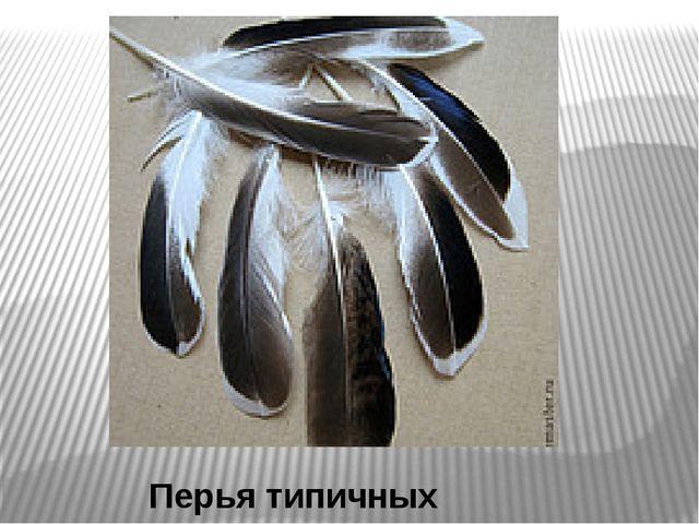 Перья типичных птиц