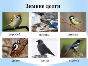 Зимние долги воробей синица ворона дятел галка сорока