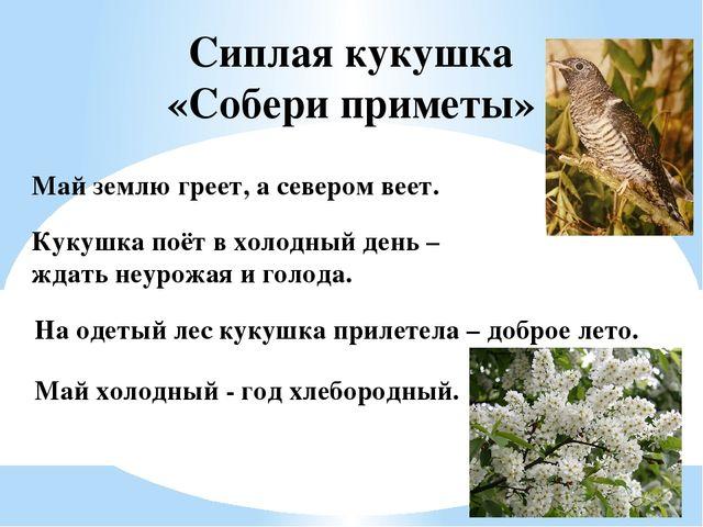 Сиплая кукушка «Собери приметы» На одетый лес кукушка прилетела – доброе лето...