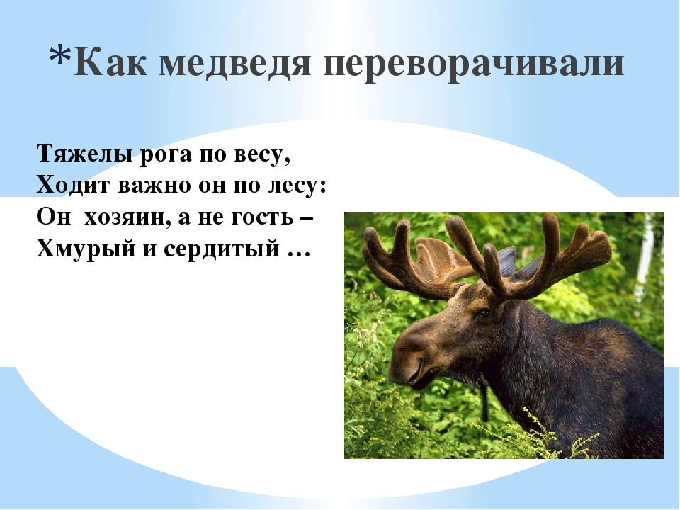 Тяжелы рога по весу, Ходит важно он по лесу: Он хозяин, а не гость – Хмуры...