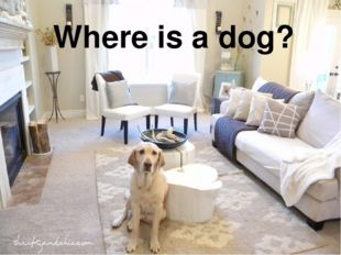 Where is a dog?