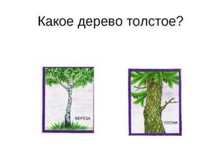 Какое дерево толстое?