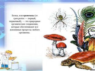 Белки, или протеины (от греч.protos — первый, первичный), — это природные орг