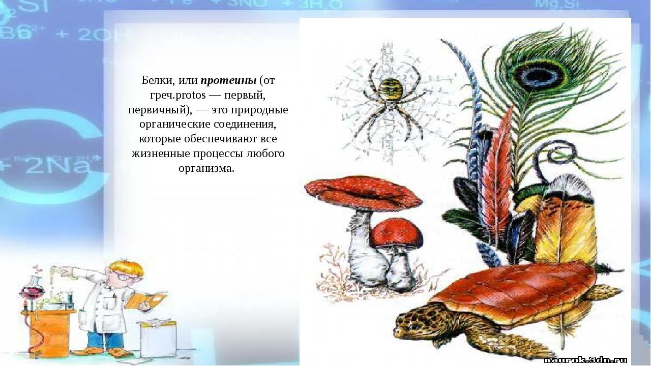 Белки, или протеины (от греч.protos — первый, первичный), — это природные орг...