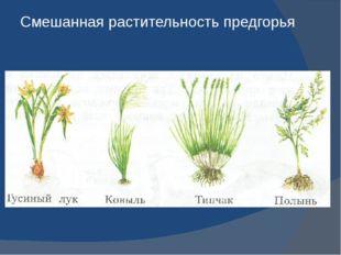 Смешанная растительность предгорья