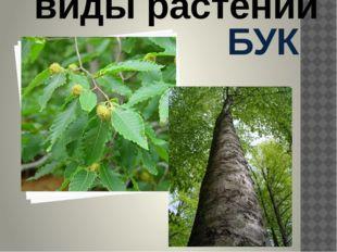 БУК Дикорастущие виды растений