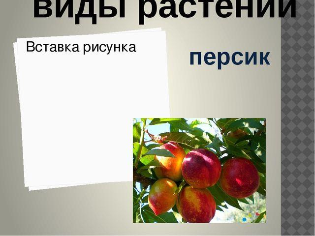 персик культурные виды растений