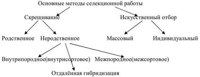 hello_html_654f9ac3.jpg
