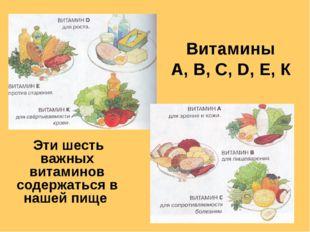 Витамины А, В, С, D, Е, К Эти шесть важных витаминов содержаться в нашей пище