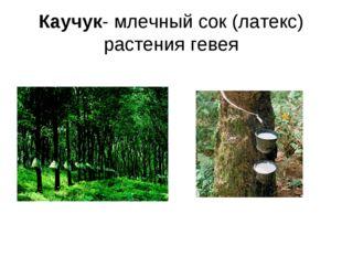 Каучук- млечный сок (латекс) растения гевея