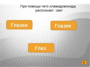 саргассы