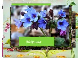 Чистяк весенний Мать- и-ма чеха Печеночница благородная Ветреница лютичная Х