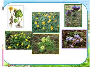 Подумай! Почему эти растения зацветают так рано?