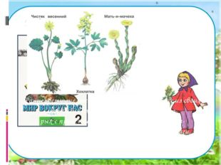Работа по учебнику. Прочитайте текст на стр. 89 учебника. Раннецветущие раст
