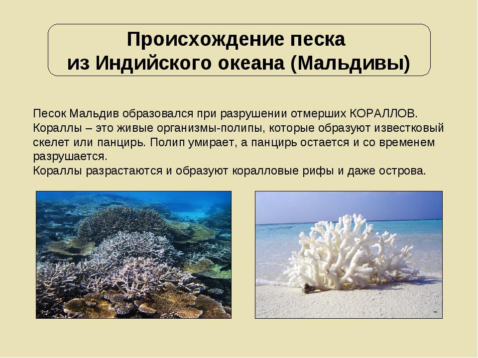 Происхождение песка из Индийского океана (Мальдивы) Песок Мальдив образовался...