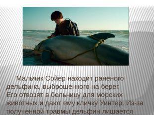 Мальчик Сойер находит раненого дельфина, выброшенного наберег. Егоотвозят