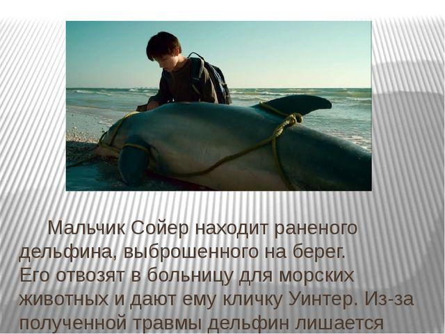 Мальчик Сойер находит раненого дельфина, выброшенного наберег. Егоотвозят...