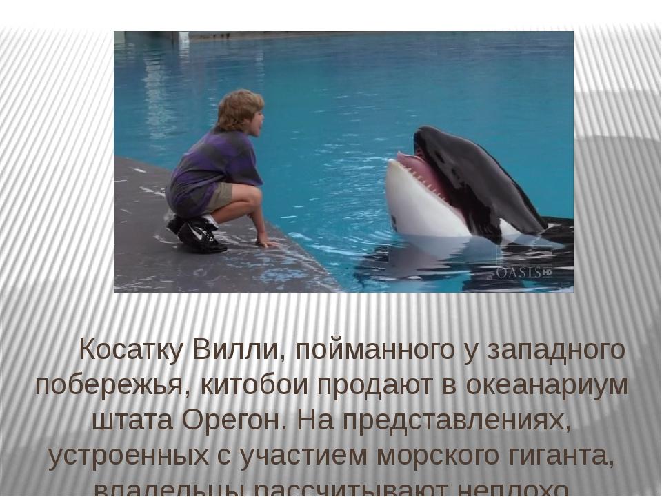 Косатку Вилли, пойманного у западного побережья, китобои продают в океанариу...