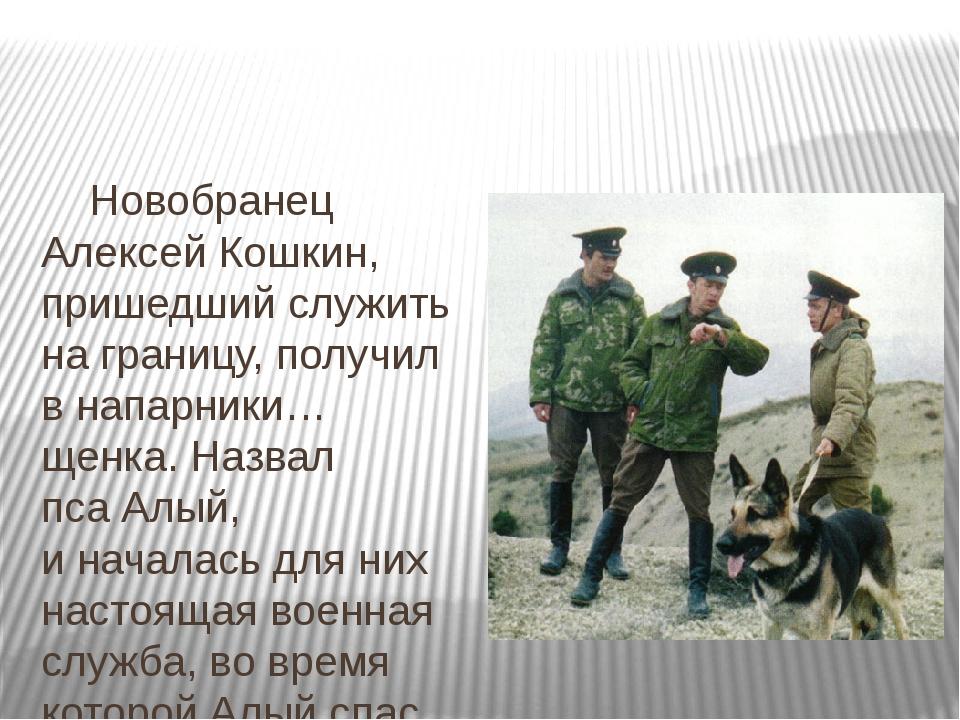 Новобранец Алексей Кошкин, пришедший служить награницу, получил внапарники...