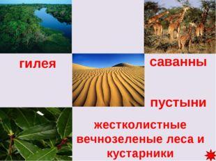 саванны пустыни гилея жестколистные вечнозеленые леса и кустарники