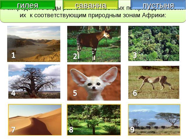 Закрепление изученного Распределите виды растений и животных по принадлежност...