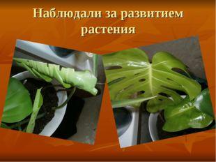 Наблюдали за развитием растения
