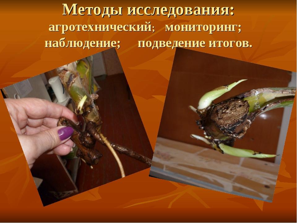 Методы исследования: агротехнический; мониторинг; наблюдение; подведение итог...