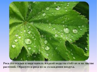 Роса это осадки в виде капель жидкой воды на стеблях и на листве растений. Об
