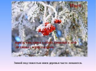 Зимой под тяжестью инея деревья часто ломаются.