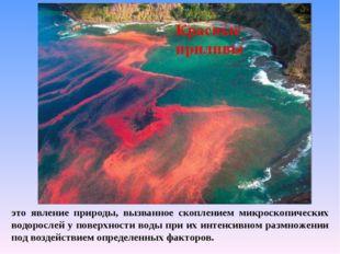 это явление природы, вызванное скоплением микроскопических водорослей у повер