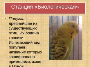 Попугаи – древнейшие из существующих птиц. Их родина тропики. Исчезающий вид