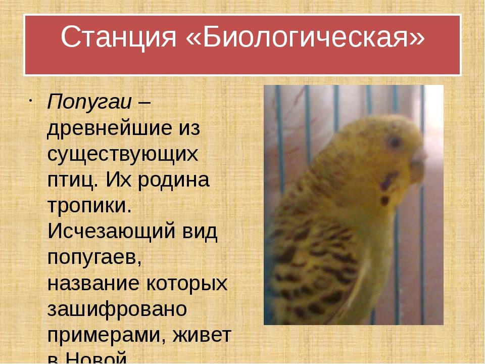 Попугаи – древнейшие из существующих птиц. Их родина тропики. Исчезающий вид...