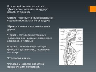 В голосовой аппарат состоит из: *Диафрагма - отделяющая грудную полость от б