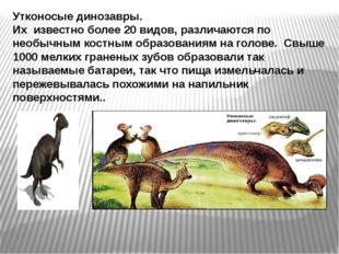 Утконосые динозавры. Их известно более 20 видов, различаются по необычным кос