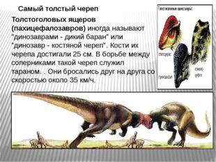 """Толстоголовых ящеров (пахицефалозавров) иногда называют """"динозаврами - дикий"""