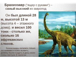 """Брахиозавр (""""ящер с руками"""") – самый высокий из завропод Он был длиной 28 м,"""