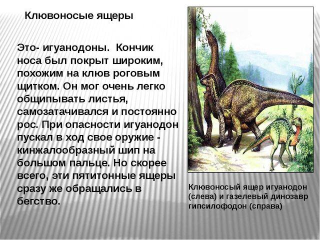 Клювоносый ящер игуанодон (слева) и газелевый динозавр гипсилофодон (справа)...