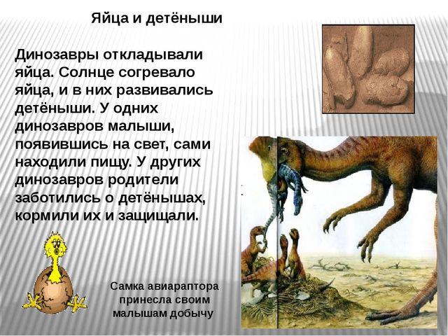 Яйца и детёныши Динозавры откладывали яйца. Солнце согревало яйца, и в них ра...