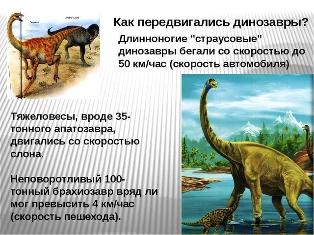 """Как передвигались динозавры? Длинноногие """"страусовые"""" динозавры бегали со ско..."""