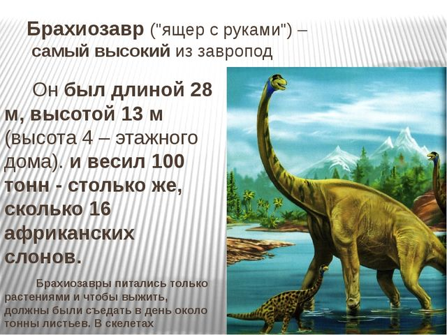 """Брахиозавр (""""ящер с руками"""") – самый высокий из завропод Он был длиной 28 м,..."""