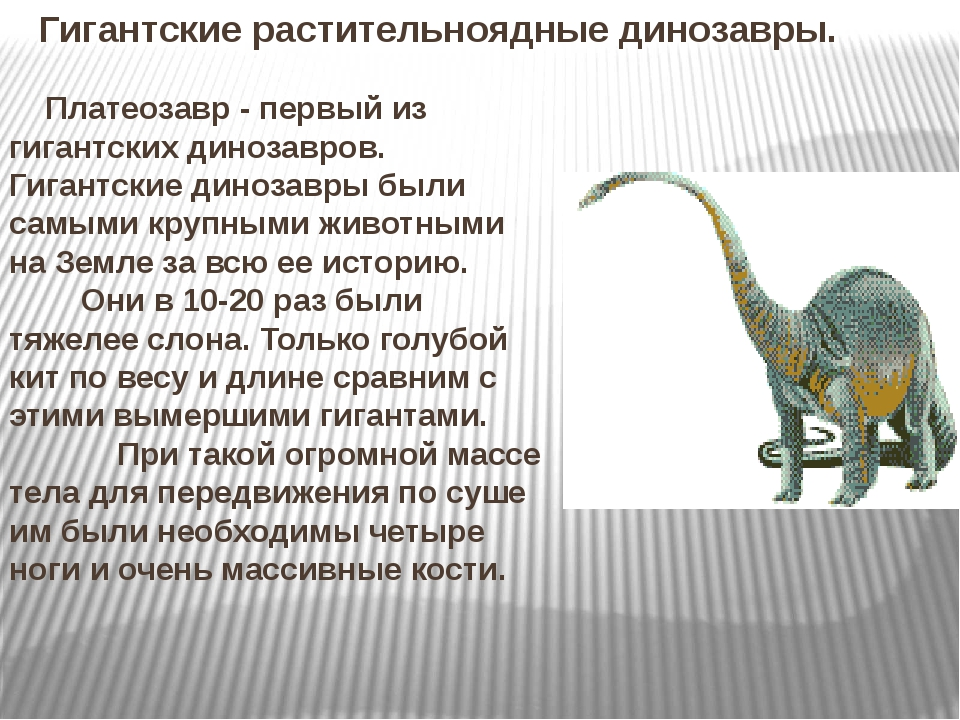 Гигантские растительноядные динозавры. Платеозавр - первый из гигантских дино...