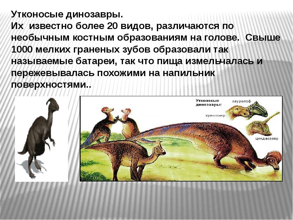 Утконосые динозавры. Их известно более 20 видов, различаются по необычным кос...