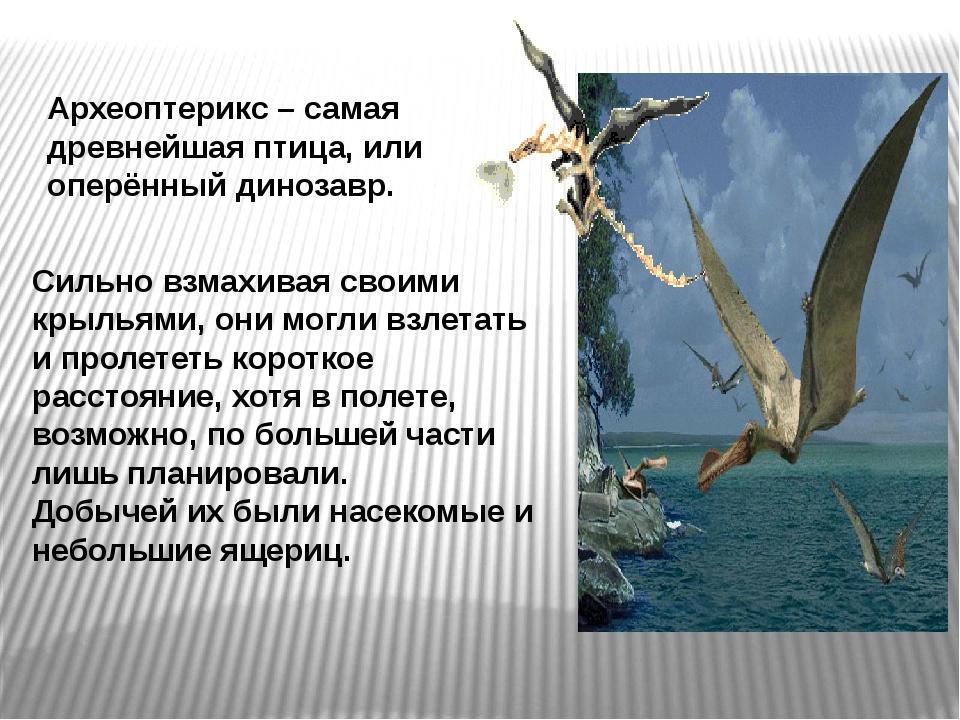 Сильно взмахивая своими крыльями, они могли взлетать и пролететь короткое рас...