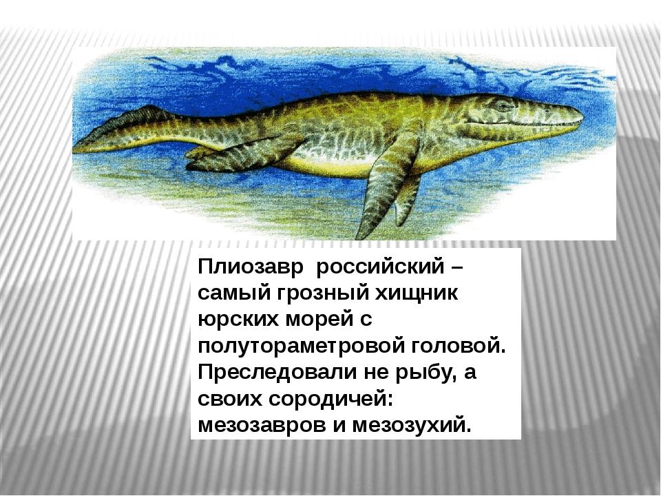 Плиозавр российский – самый грозный хищник юрских морей с полутораметровой го...