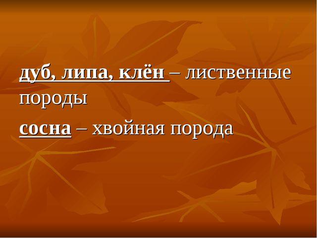 дуб, липа, клён – лиственные породы сосна – хвойная порода