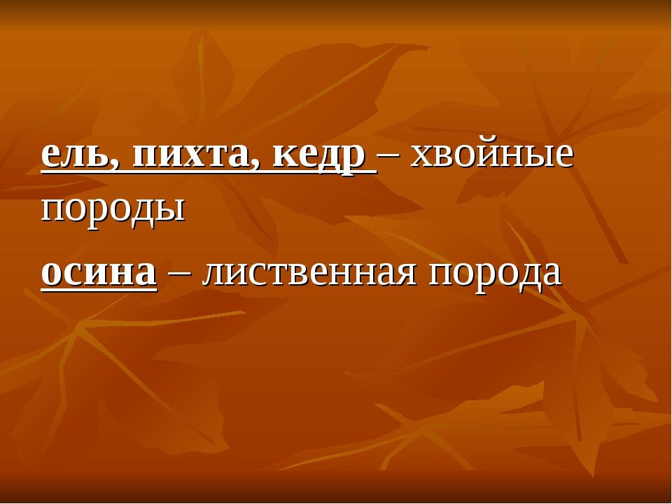 ель, пихта, кедр – хвойные породы осина – лиственная порода