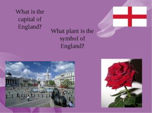 What is the capital of England? What plant is the symbol of England?