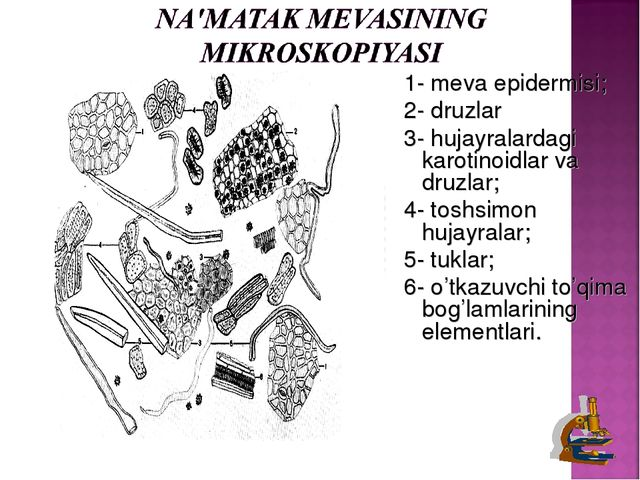 1- meva epidermisi; 2- druzlar 3- hujayralardagi karotinoidlar va druzlar; 4-...